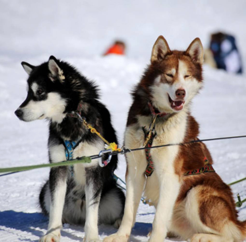 Dog sledging on the winter family fun trip