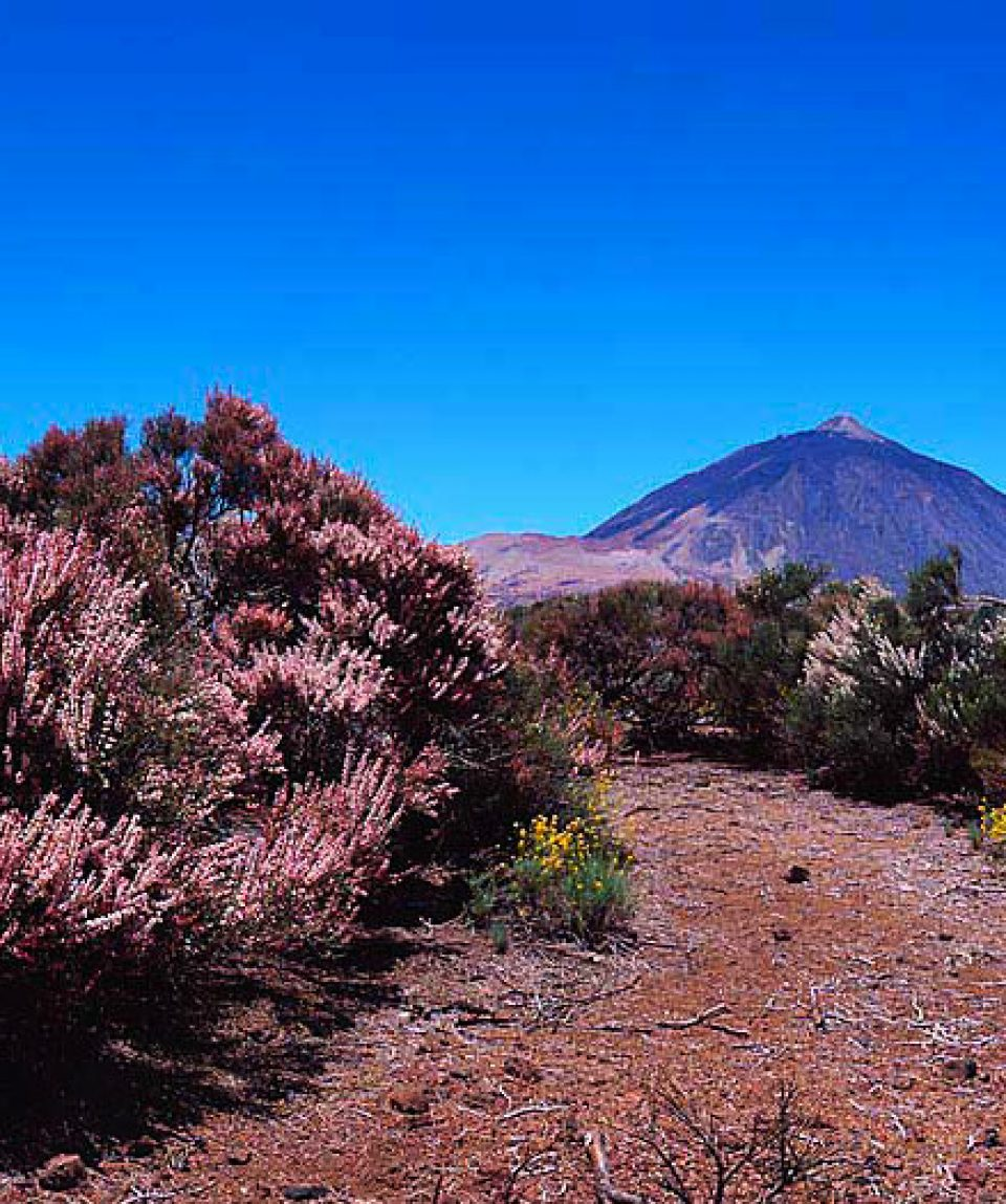 Tenerife from Sea to Summit Challenge round walk