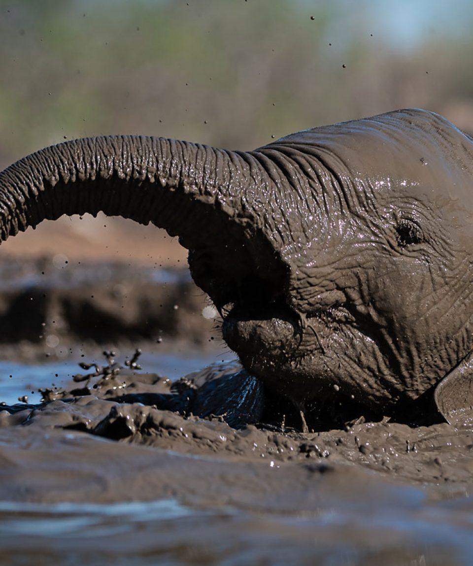 African Wildlife 1