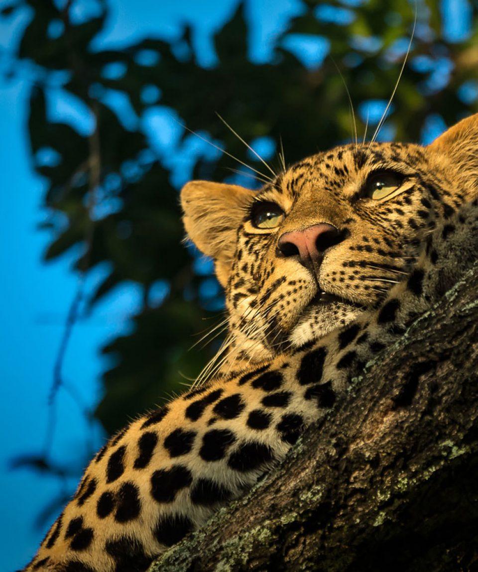 African Wildlife 4