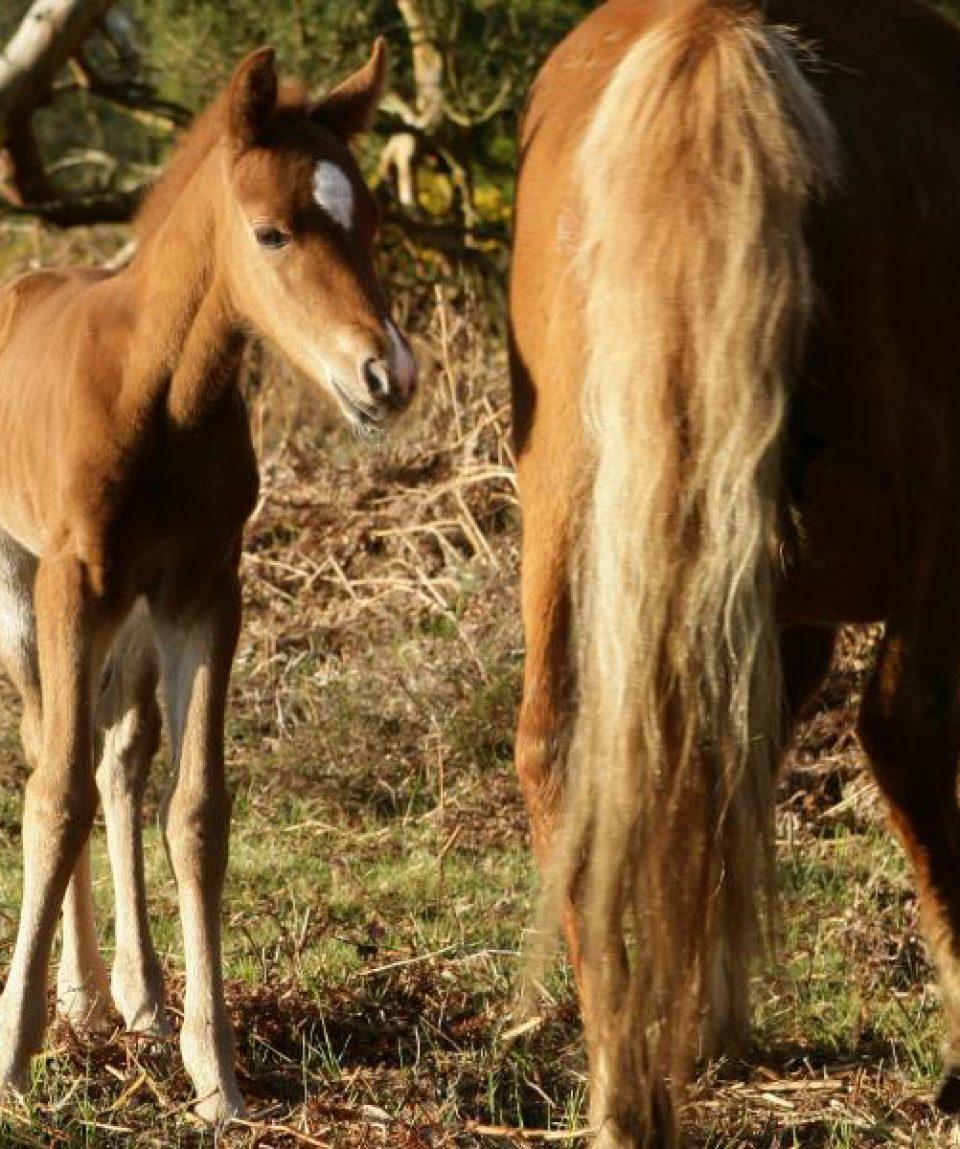 #poneys nfx